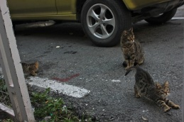 Cats are EVERYWHERE in Cyprus. These cuties reside in Larnaca.